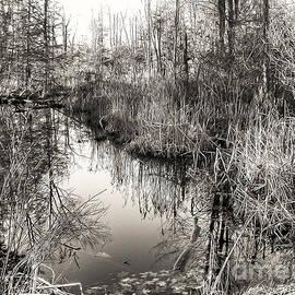 Betsy Zimmerli - Wetland Essence