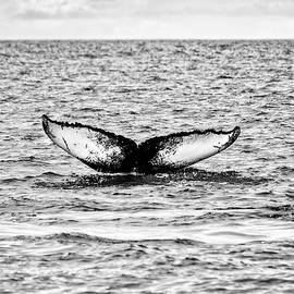 Claire Walsh - Whale Fluke