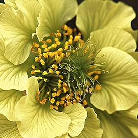 CJ Anderson - What A Geum