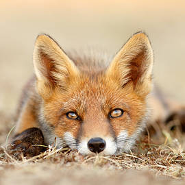 What Does the Fox Think? - Roeselien Raimond