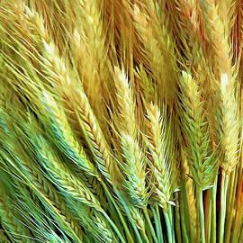 Casey Heisler - Wheat Heads