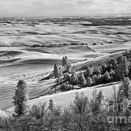 Martin Konopacki - Wheatfields of Kamiak Butte
