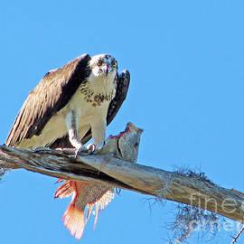 Sabrina Wheeler - When Osprey Threatens