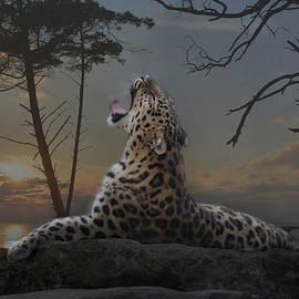 when the night comes - Joachim G Pinkawa
