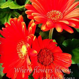 Nancy E Stein - Where Flowers Bloom