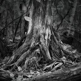Susan Capuano - Where Roots Run Deep