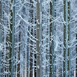 Whimsical Winters - Roeselien Raimond