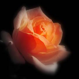Karen Cook - Whispers of a rose