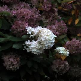 Marcia Lee Jones - White Among Purple