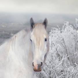 Michele Loftus - White Beauty