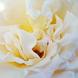 Baslee Troutman - White Creamy Pastel Rose Flower Baslee Troutman