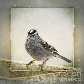 Janice Rae Pariza - White Crowned Sparrow in Snow Frame