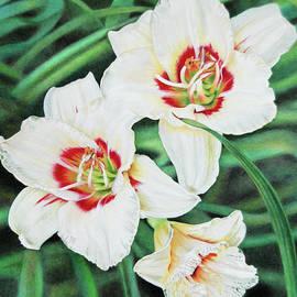 Terry Mellway - White Daylilies Trio