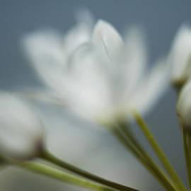 Yaniv Eitan - White Flower 2