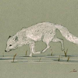 White fox walking - Juan  Bosco
