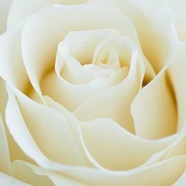 Larissa Martin - White garden rose