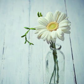 Svetlana Imagineisle - White gerbera flower by Svetlana Imagineisle