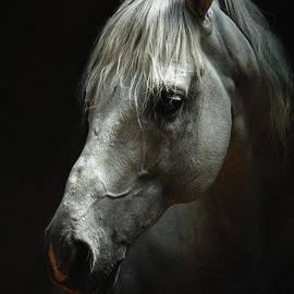 Dimitar Hristov - White horse portrait