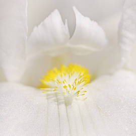 Jennie Marie Schell - White Iris Flower in Macro