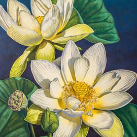 Fiona Craig - White Lotuses 1