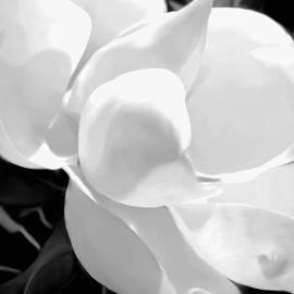 Kathy Franklin - White Magnolia