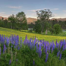 Bill Wakeley - White Mountain Sunset