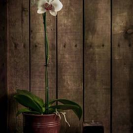 DeWayne Beard - White orchid