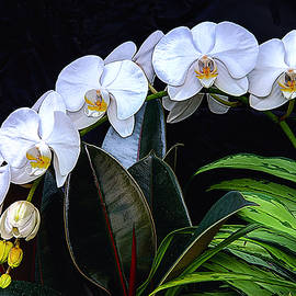 OLena Art - White Orchids