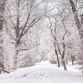 Jenny Rainbow - White Path to Winter Dream