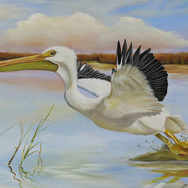 Phyllis Beiser - White Pelican In The Louisiana Marsh