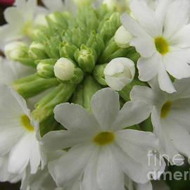 Kim Tran - White Petals #1
