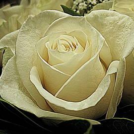 Bonita Brandt - White Rose Bouquet