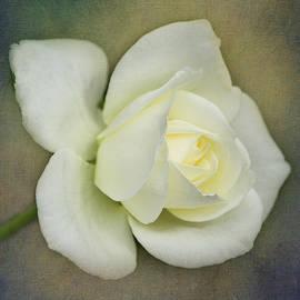 Teresa Wilson - White Rose Bud Texture