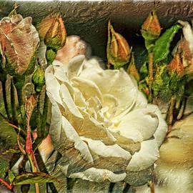 Geraldine Scull - White Rose