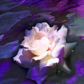 Olga K - White Rose