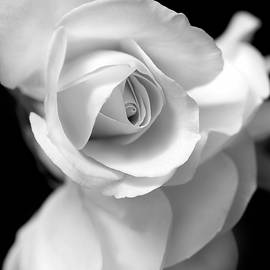 Jennie Marie Schell - White Rose Petals Black and White
