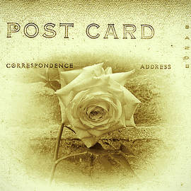 Bill Cannon - White Rose Post Card
