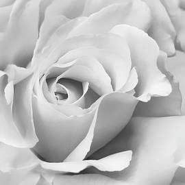 Jennie Marie Schell - White Rose Ruffles Monochrome