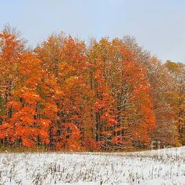 Terri Gostola - White Snow in Autumn