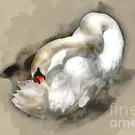 Barbara Dudzinska - White Swan 1