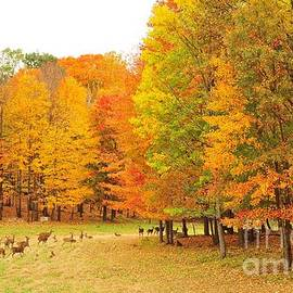 Terri Gostola - White Tail Deer in Autumn