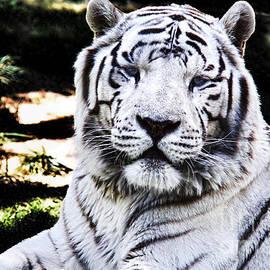 Mariola Bitner - White Tiger