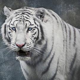 Wim Lanclus - White Tiger