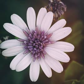 Saija Lehtonen - White With a Hint of Purple