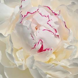 Lynn Hopwood - White with dark pink peony