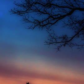 Thomas R Fletcher - Whitetail at Dawn