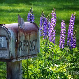Scott Thorp - Whos Mailbox 2015