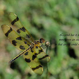 Linda  Howes - Why dragonflies have extra wings