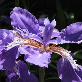 Brooks Garten Hauschild - Wild About Iris
