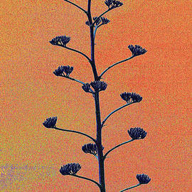Tom Janca - Wild Arizona Agave